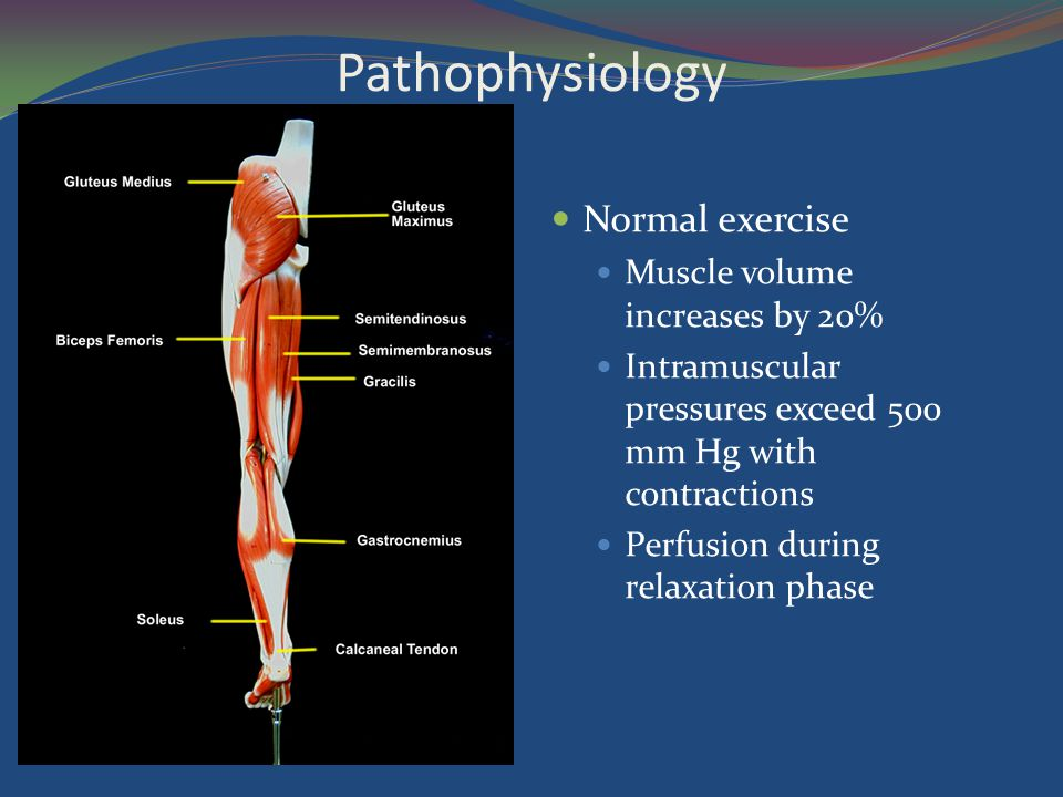 Pathophysiology Normal exercise Muscle volume increases by 20%