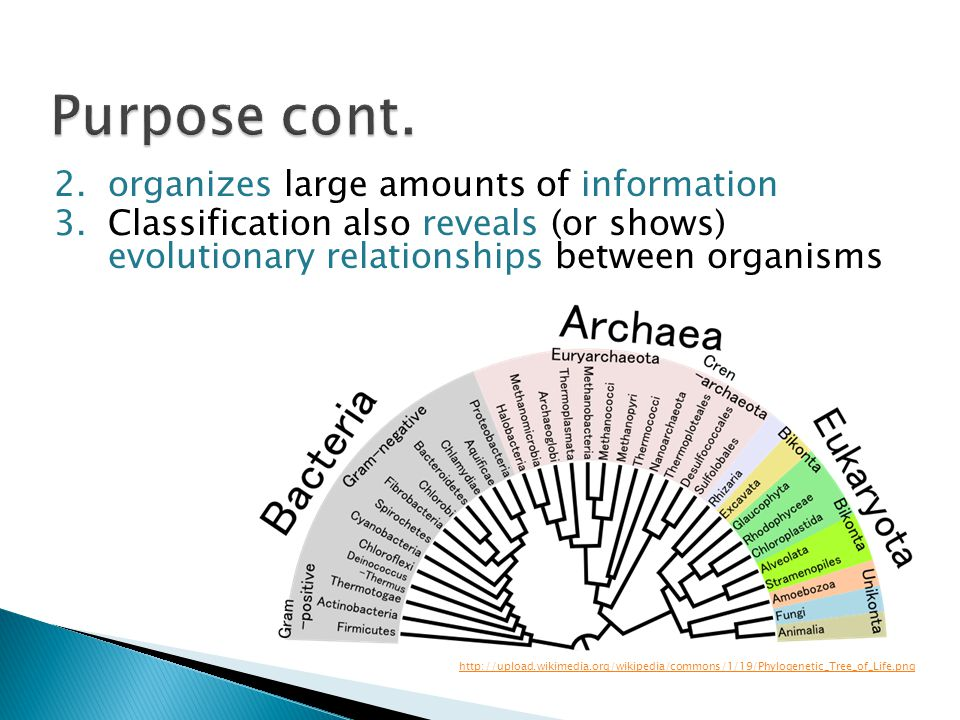 Purpose cont. organizes large amounts of information
