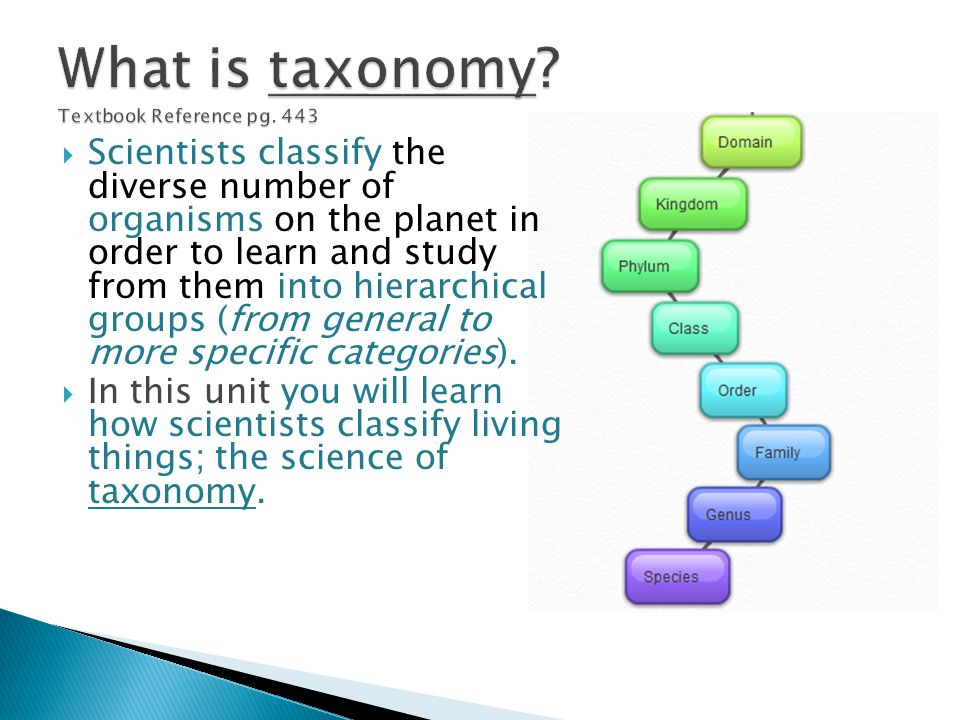 What is taxonomy Textbook Reference pg. 443