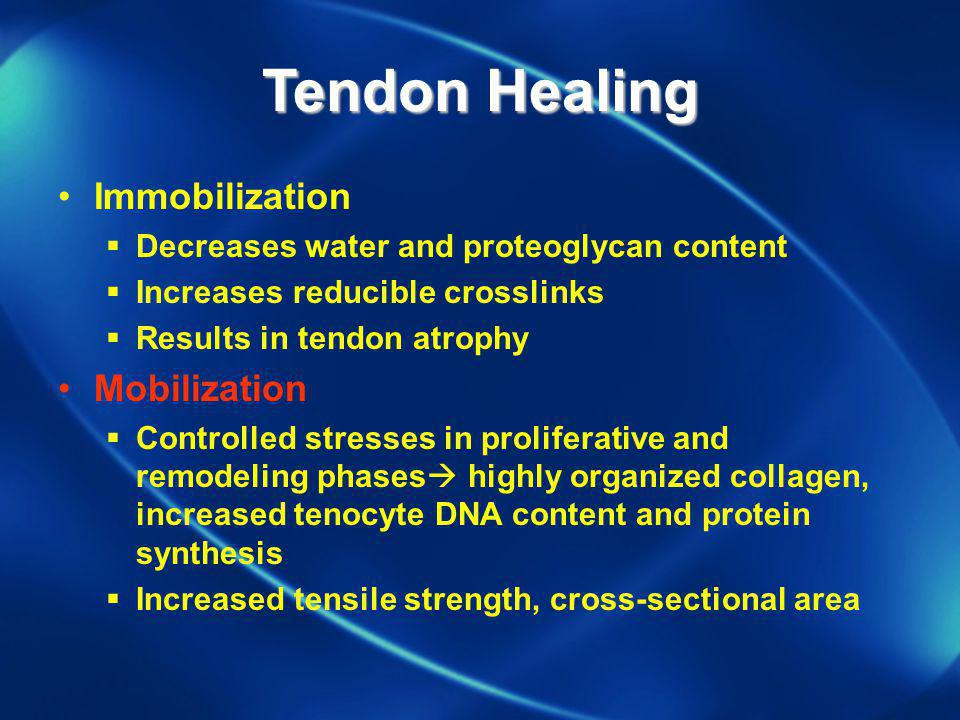 Tendon Healing Immobilization Mobilization