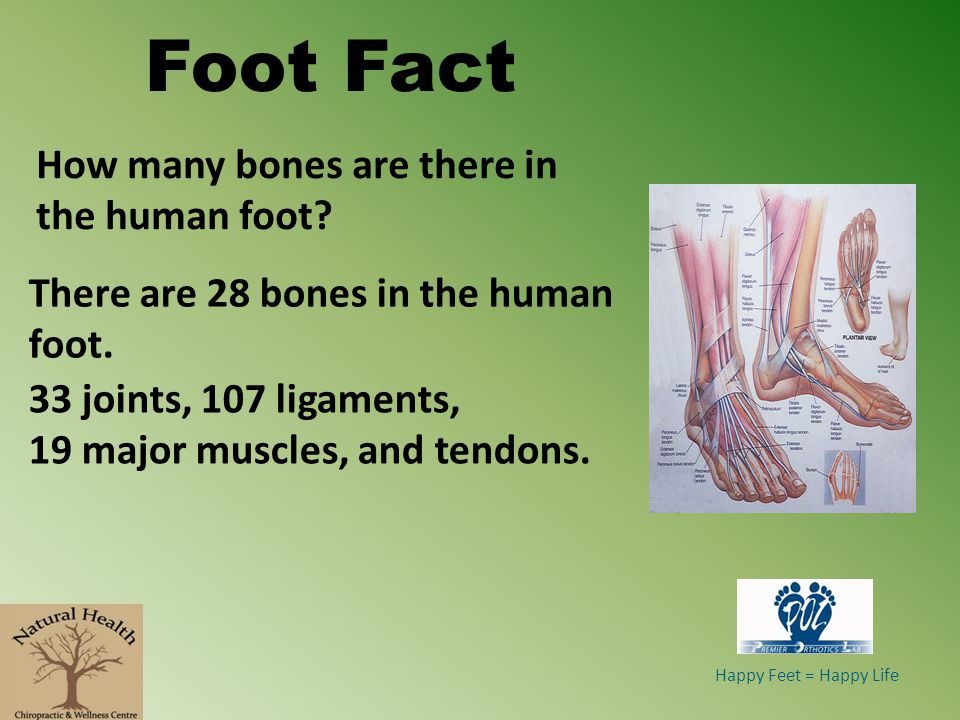 Foot Fact How many bones are there in the human foot