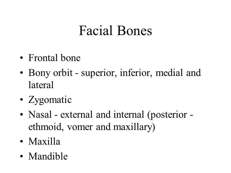 Facial Bones Frontal bone