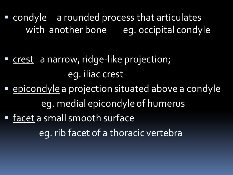 condyle a rounded process that articulates. with. another bone eg