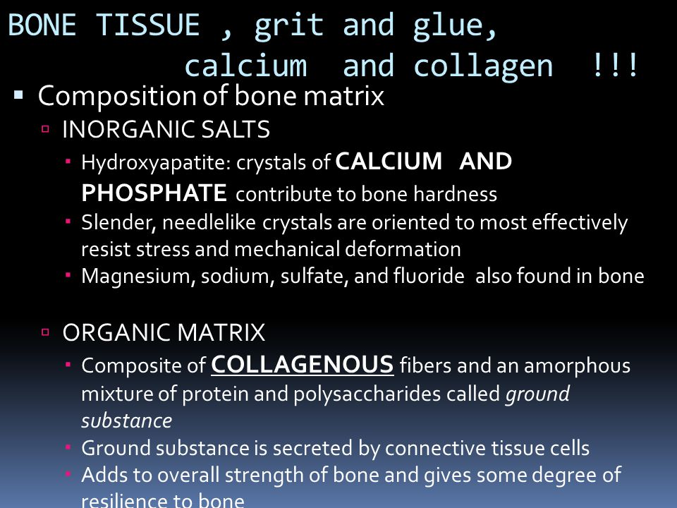 BONE TISSUE , grit and glue, calcium and collagen !!!