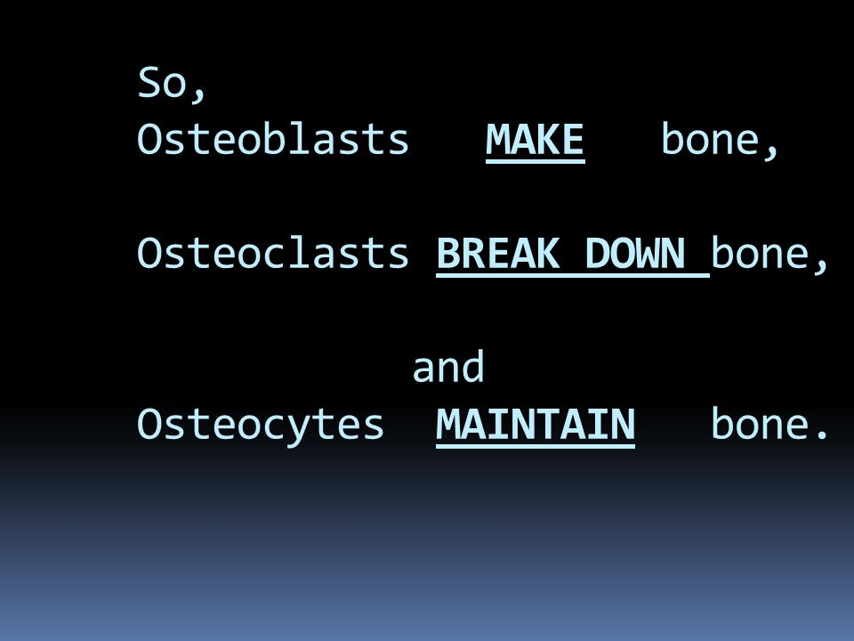 So, Osteoblasts MAKE bone, Osteoclasts BREAK DOWN bone, and Osteocytes MAINTAIN bone.