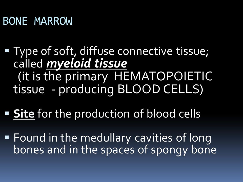 (it is the primary HEMATOPOIETIC tissue - producing BLOOD CELLS)