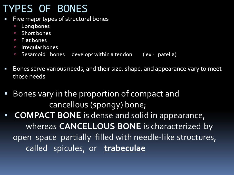 TYPES OF BONES Five major types of structural bones. Long bones. Short bones. Flat bones. Irregular bones.