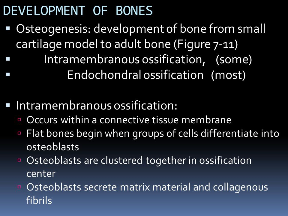 DEVELOPMENT OF BONES Osteogenesis: development of bone from small cartilage model to adult bone (Figure 7-11)
