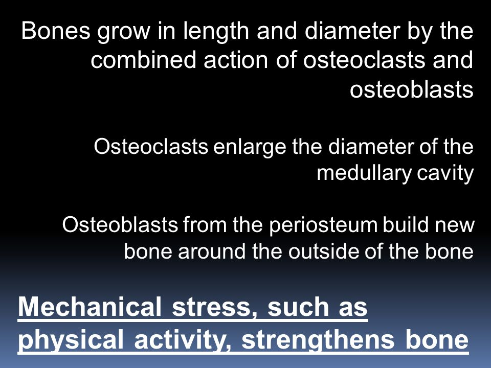 Mechanical stress, such as physical activity, strengthens bone