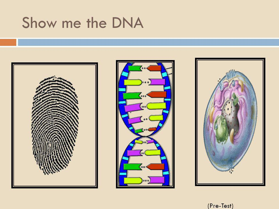 Show me the DNA (Pre-Test)