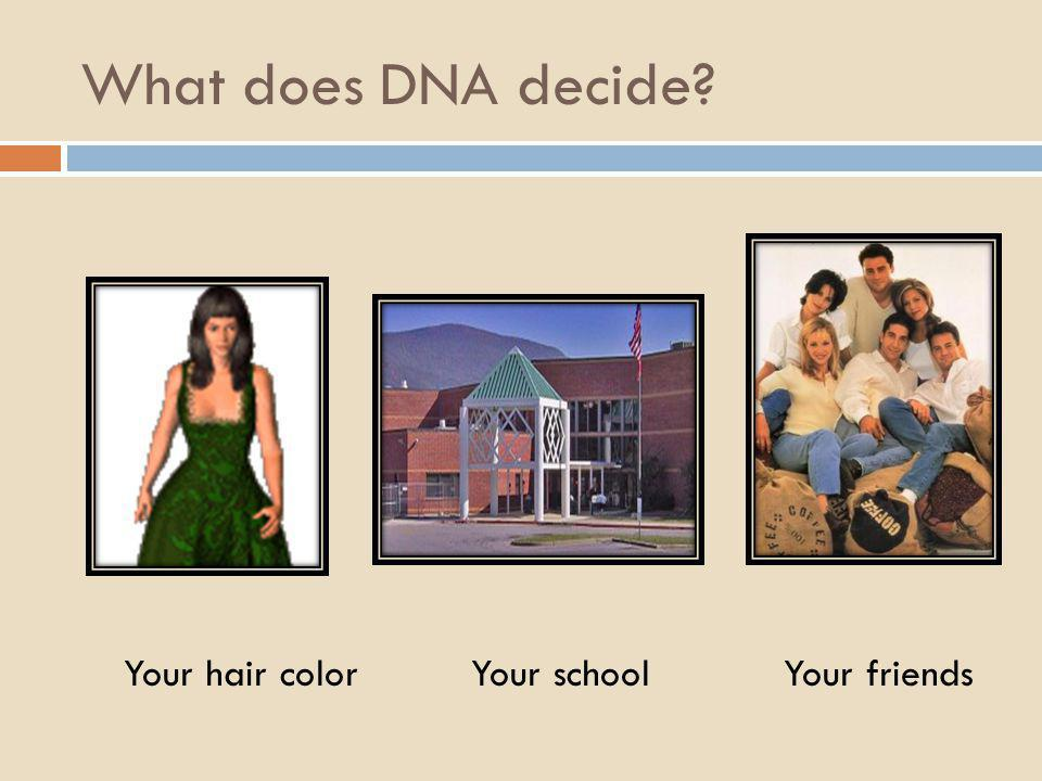 What does DNA decide Your hair color Your school Your friends