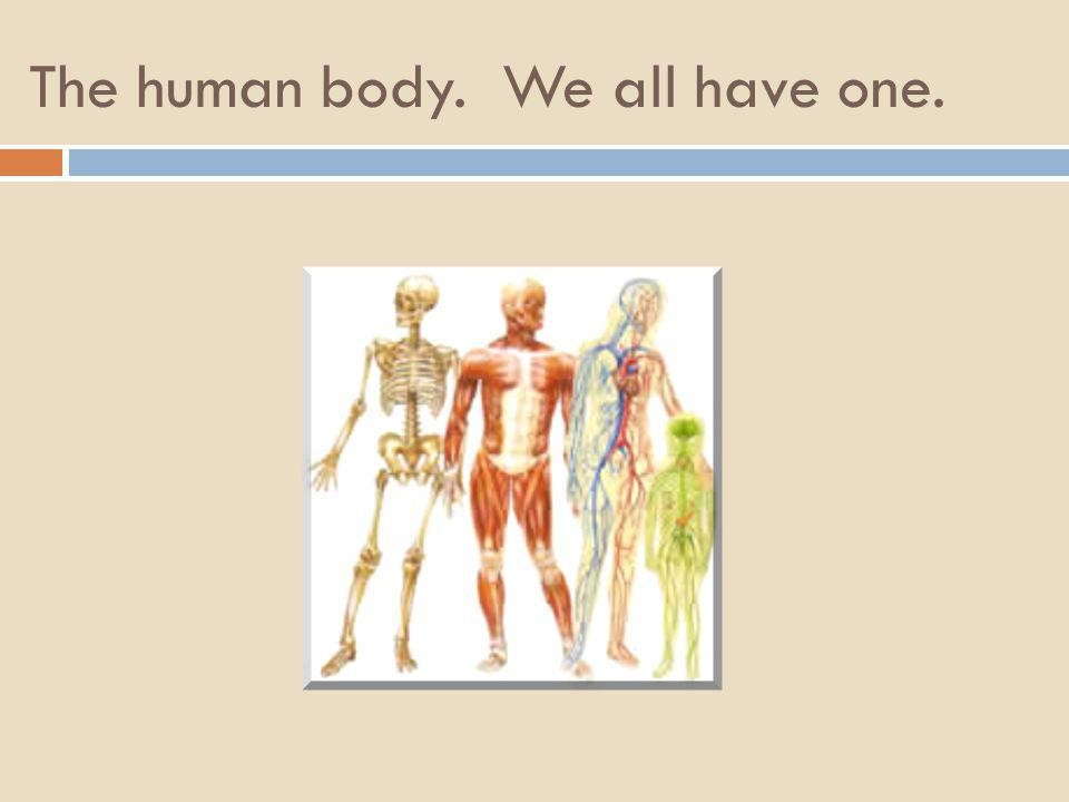 The human body. We all have one.