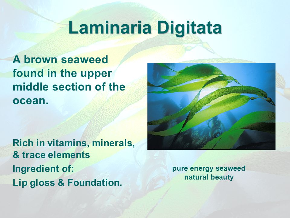 Laminaria Digitata A brown seaweed found in the upper middle section of the ocean. Rich in vitamins, minerals, & trace elements.