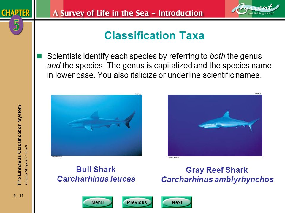 Classification Taxa