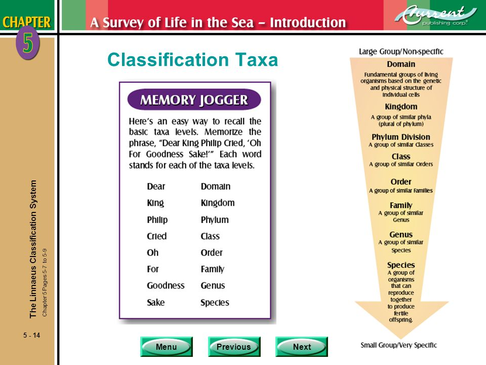 Classification Taxa The Linnaeus Classification System