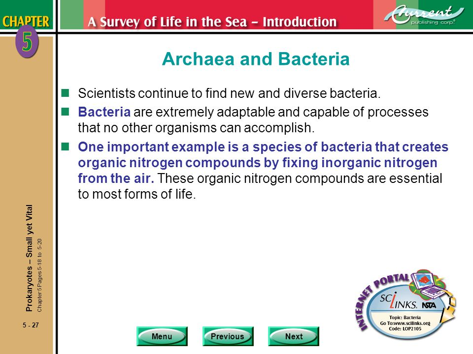 Archaea and Bacteria Scientists continue to find new and diverse bacteria.