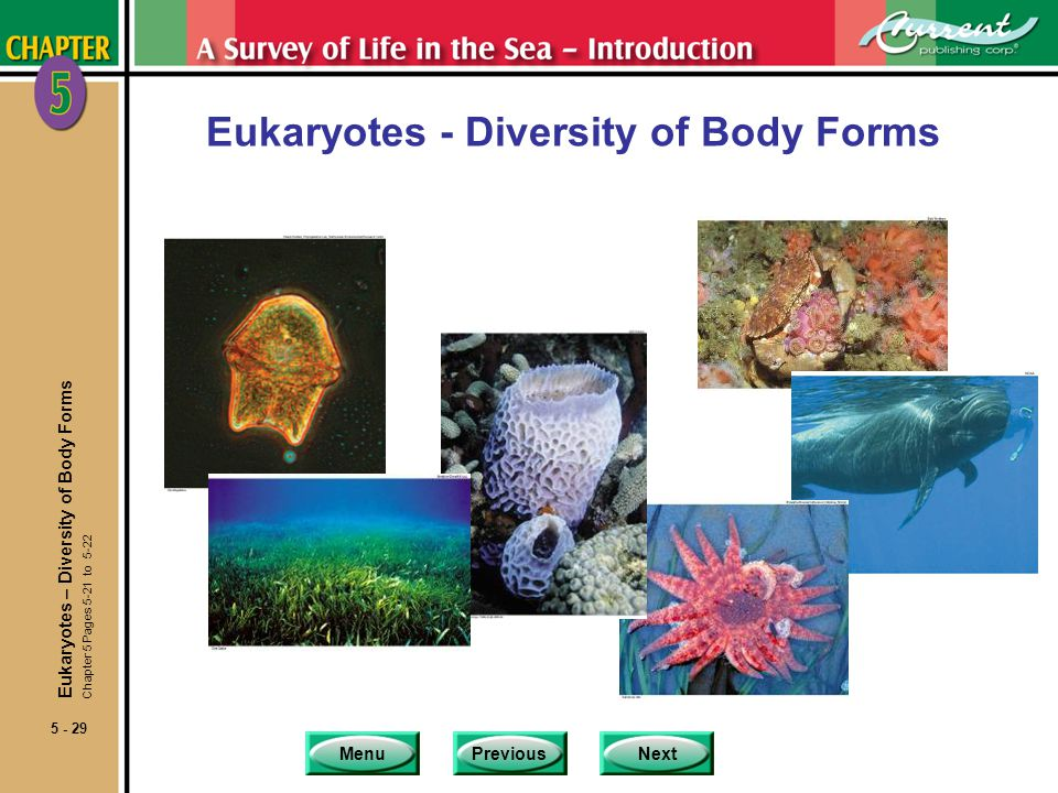 Eukaryotes - Diversity of Body Forms