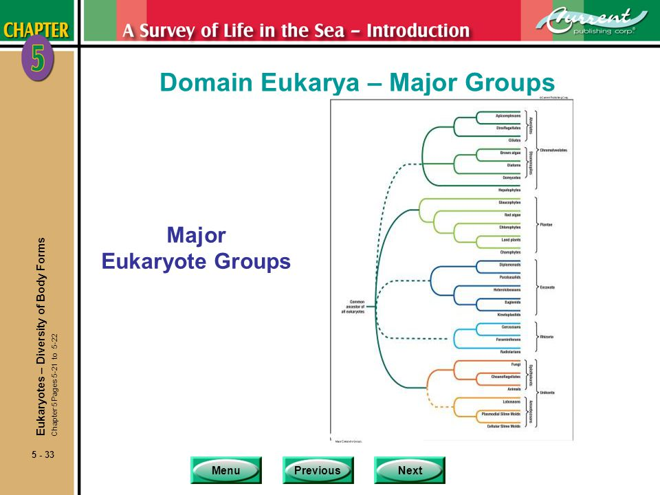 Domain Eukarya – Major Groups