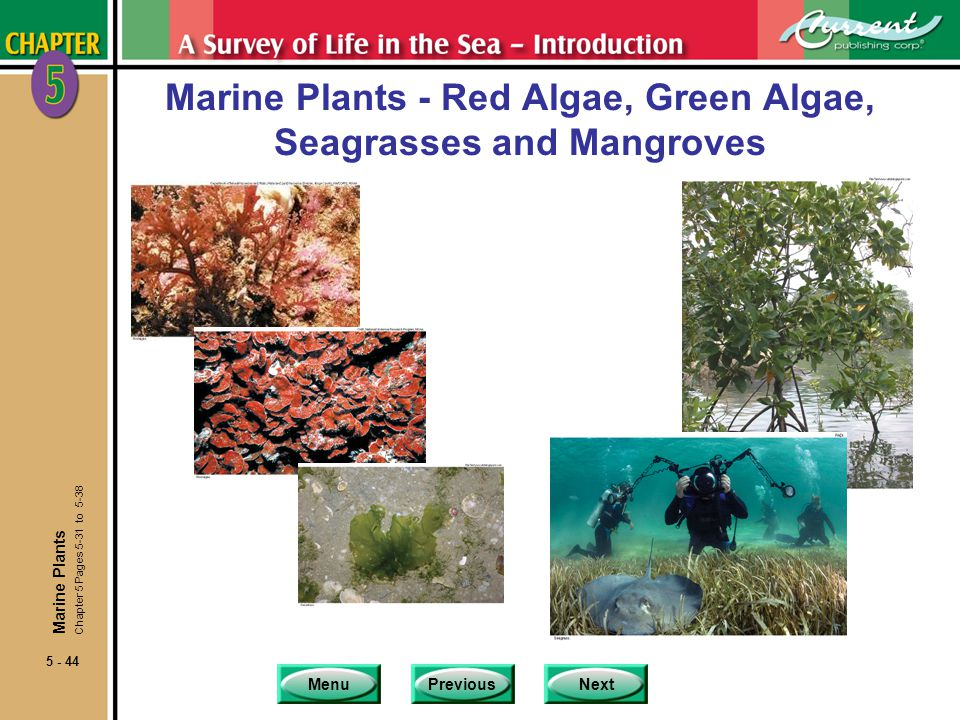 Marine Plants - Red Algae, Green Algae, Seagrasses and Mangroves