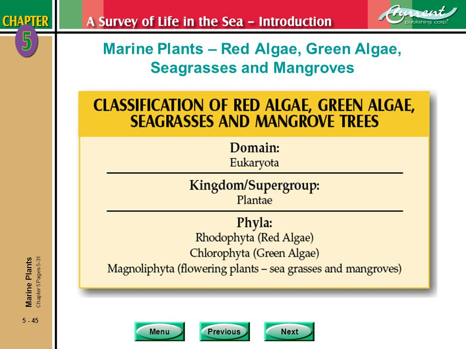 Marine Plants – Red Algae, Green Algae, Seagrasses and Mangroves