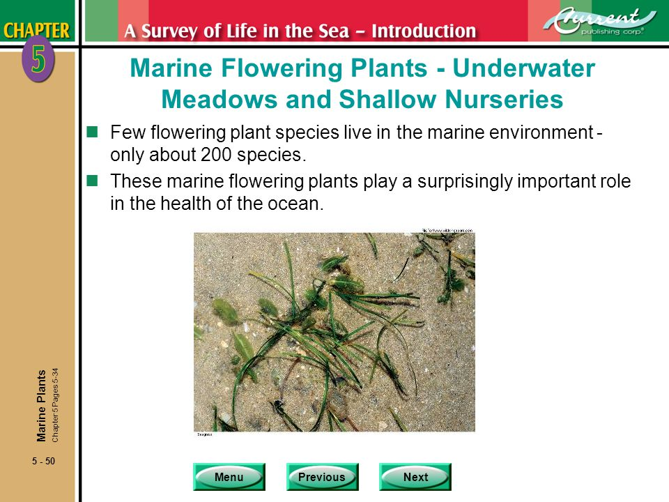 Marine Flowering Plants - Underwater Meadows and Shallow Nurseries