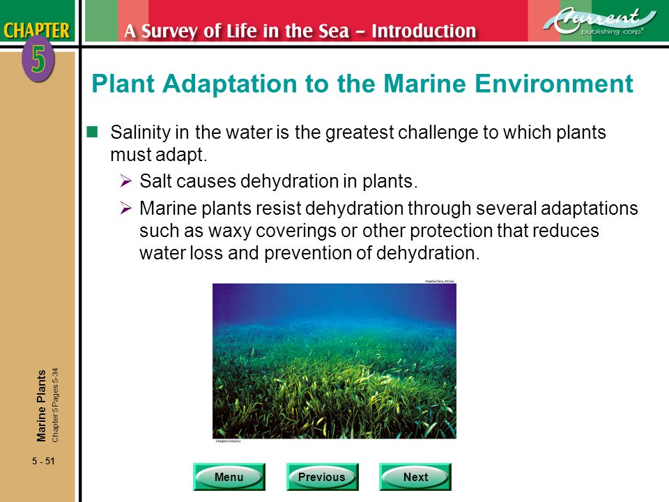 Plant Adaptation to the Marine Environment