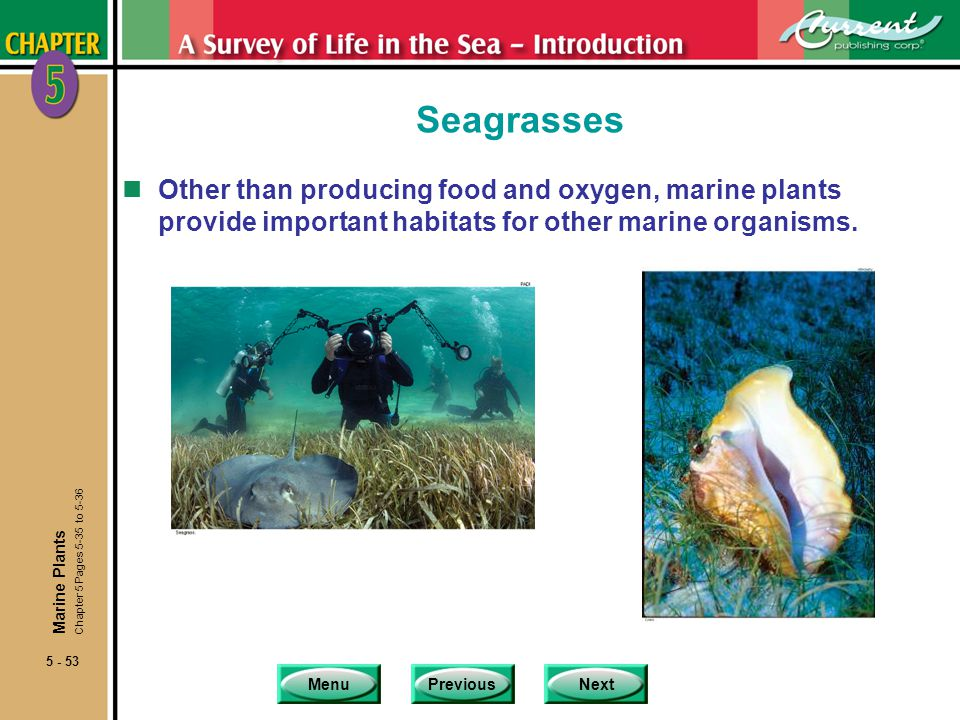 Seagrasses Other than producing food and oxygen, marine plants provide important habitats for other marine organisms.