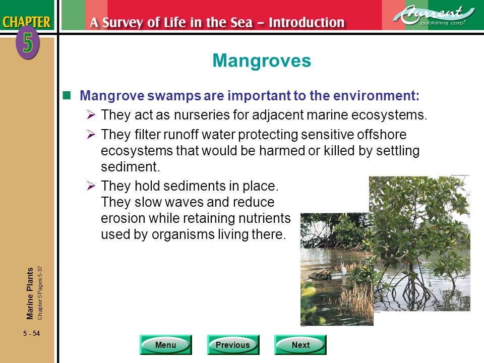 Mangroves Mangrove swamps are important to the environment: