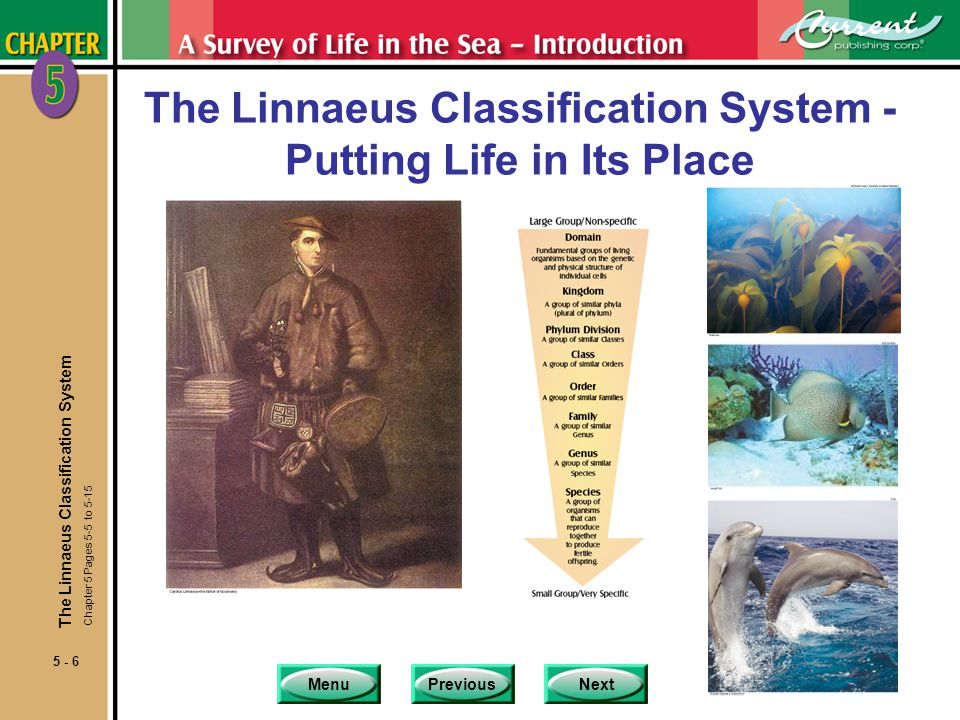 The Linnaeus Classification System - Putting Life in Its Place