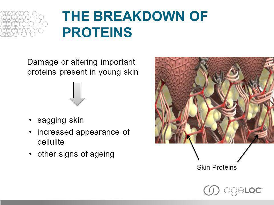 The Breakdown of Proteins
