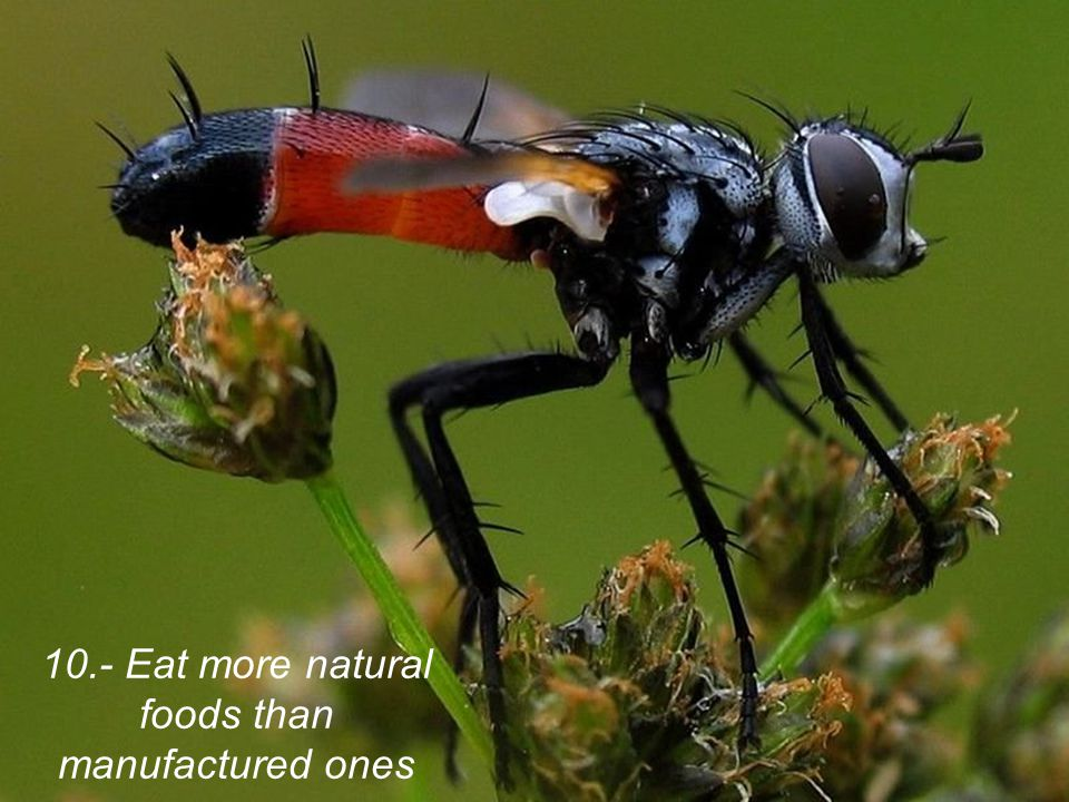10.- Eat more natural foods than manufactured ones