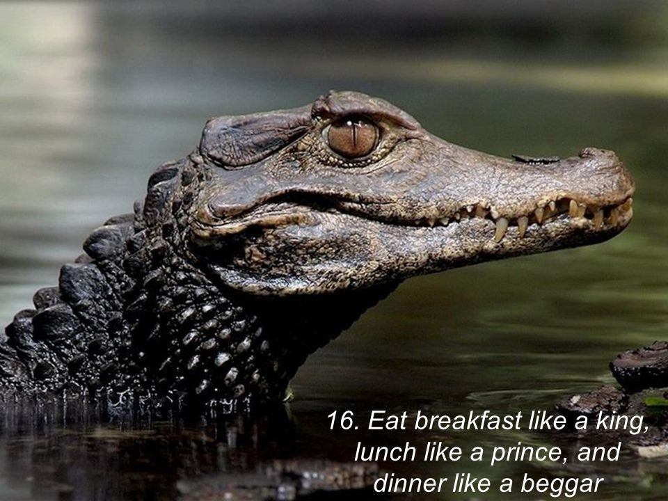 16. Eat breakfast like a king, lunch like a prince, and