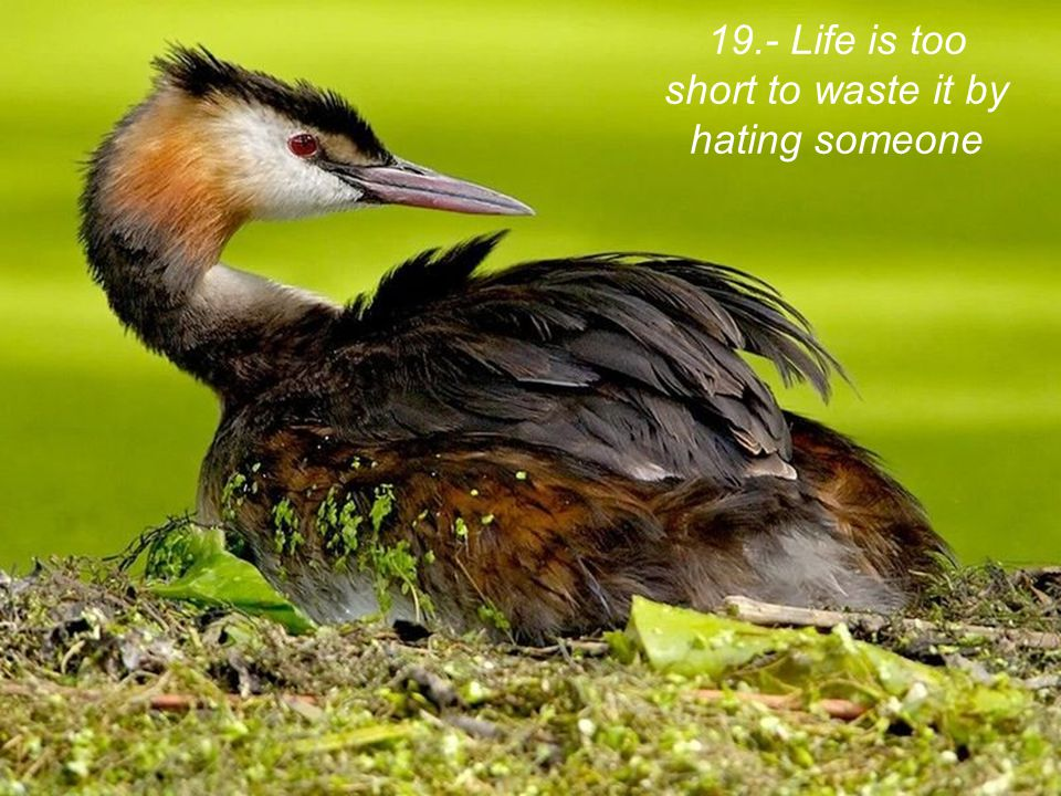 19.- Life is too short to waste it by hating someone
