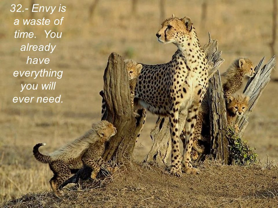 32.- Envy is a waste of time. You already have everything you will ever need.