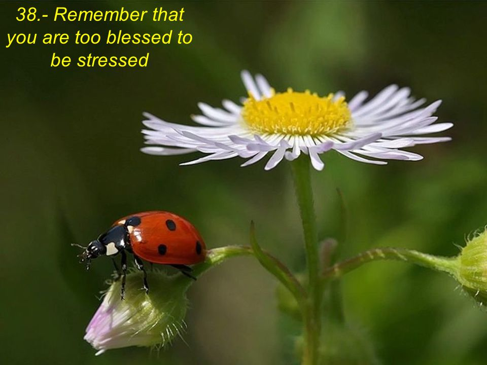 38.- Remember that you are too blessed to be stressed