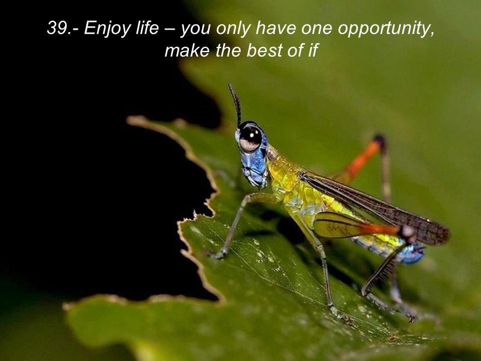 39.- Enjoy life – you only have one opportunity, make the best of if