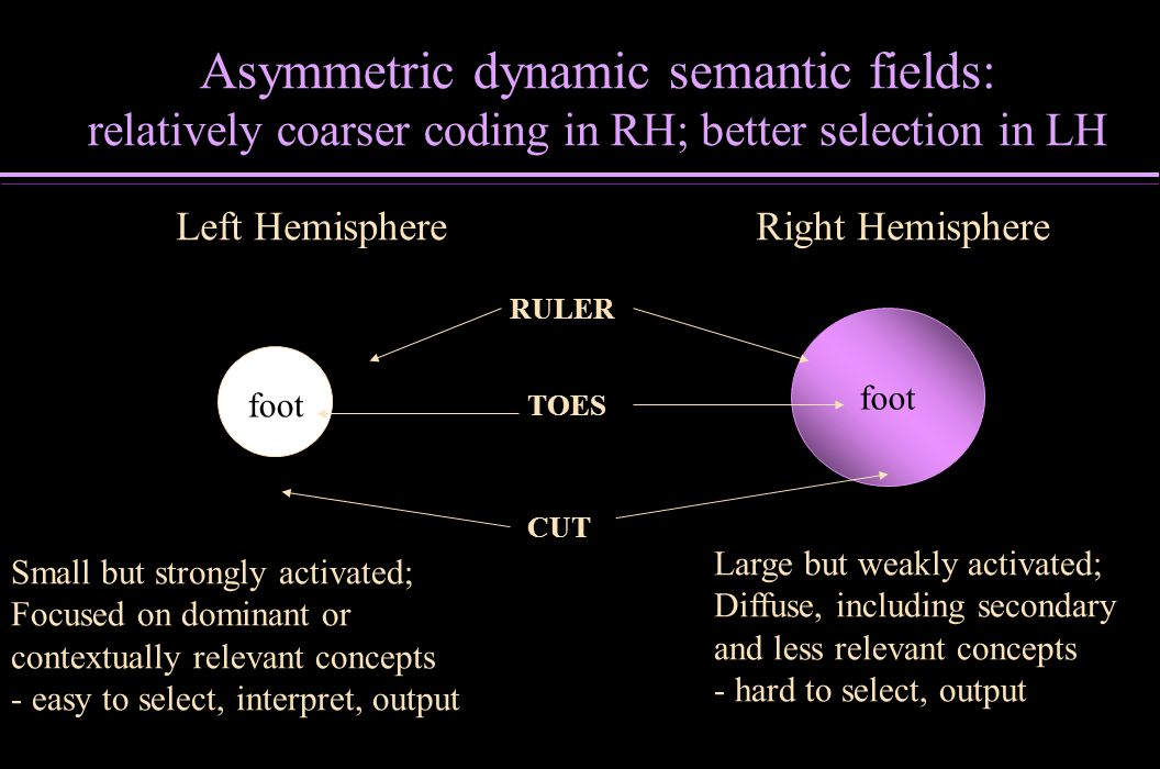 Asymmetric dynamic semantic fields: relatively coarser coding in RH; better selection in LH