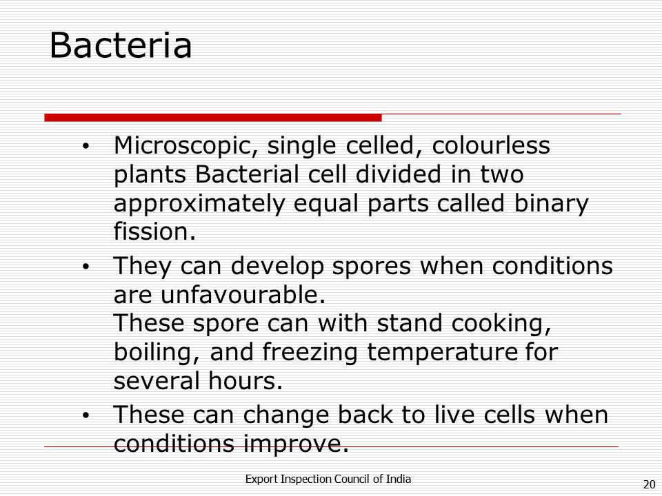 Bacteria Microscopic, single celled, colourless plants Bacterial cell divided in two approximately equal parts called binary fission.