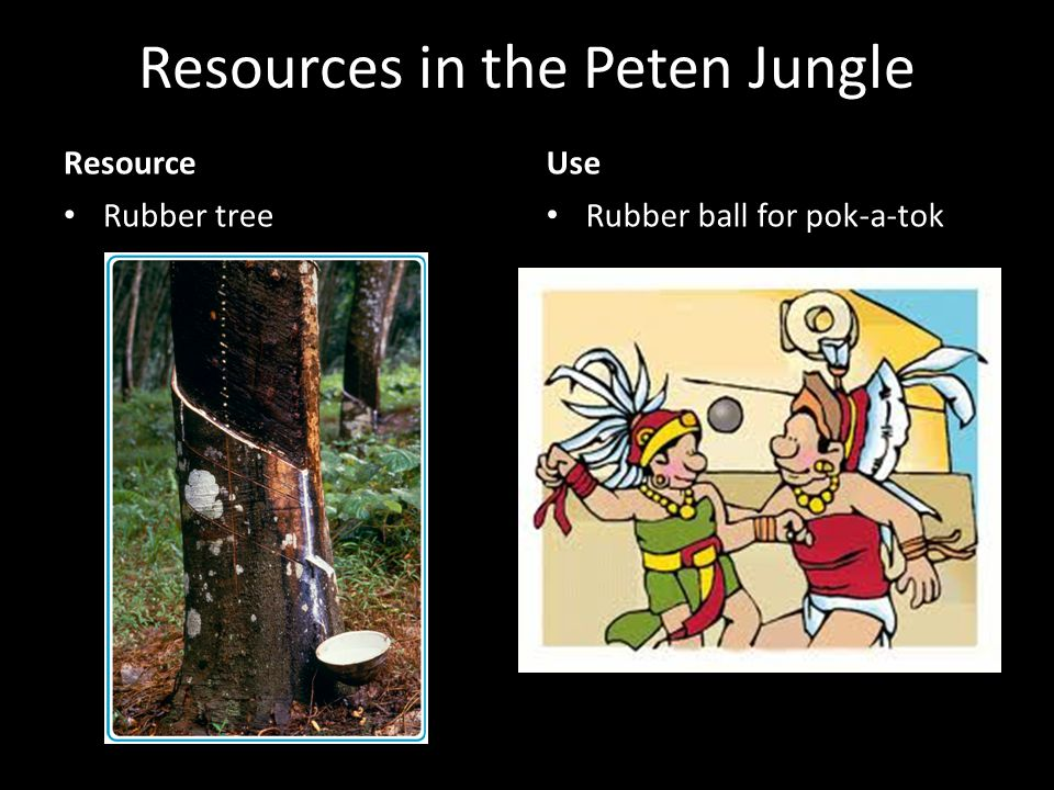 Resources in the Peten Jungle