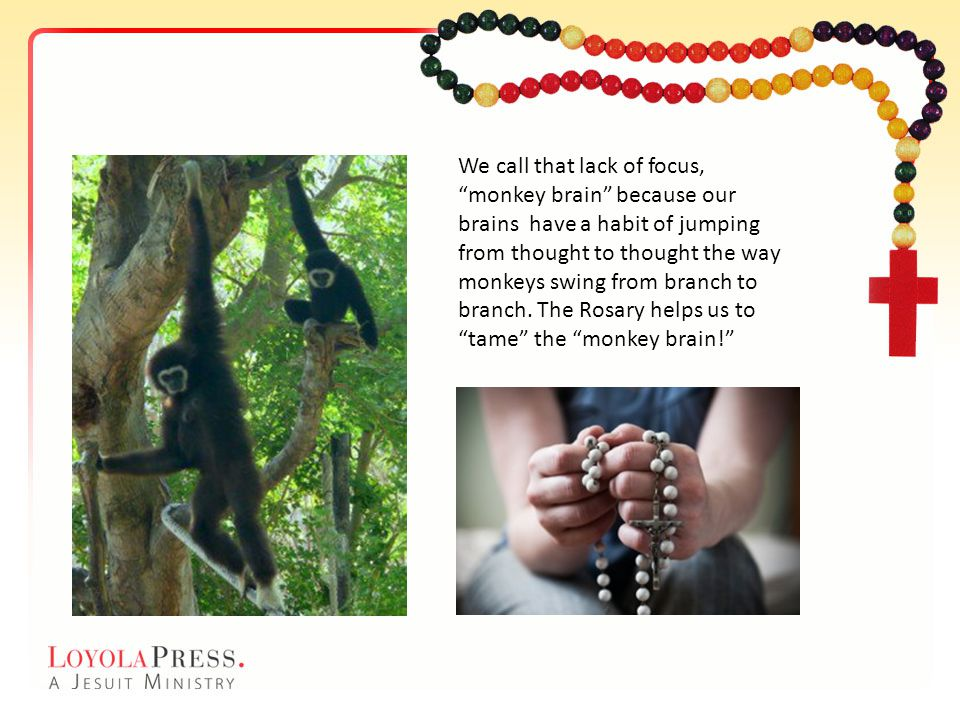 We call that lack of focus, monkey brain because our brains have a habit of jumping from thought to thought the way monkeys swing from branch to branch. The Rosary helps us to tame the monkey brain!