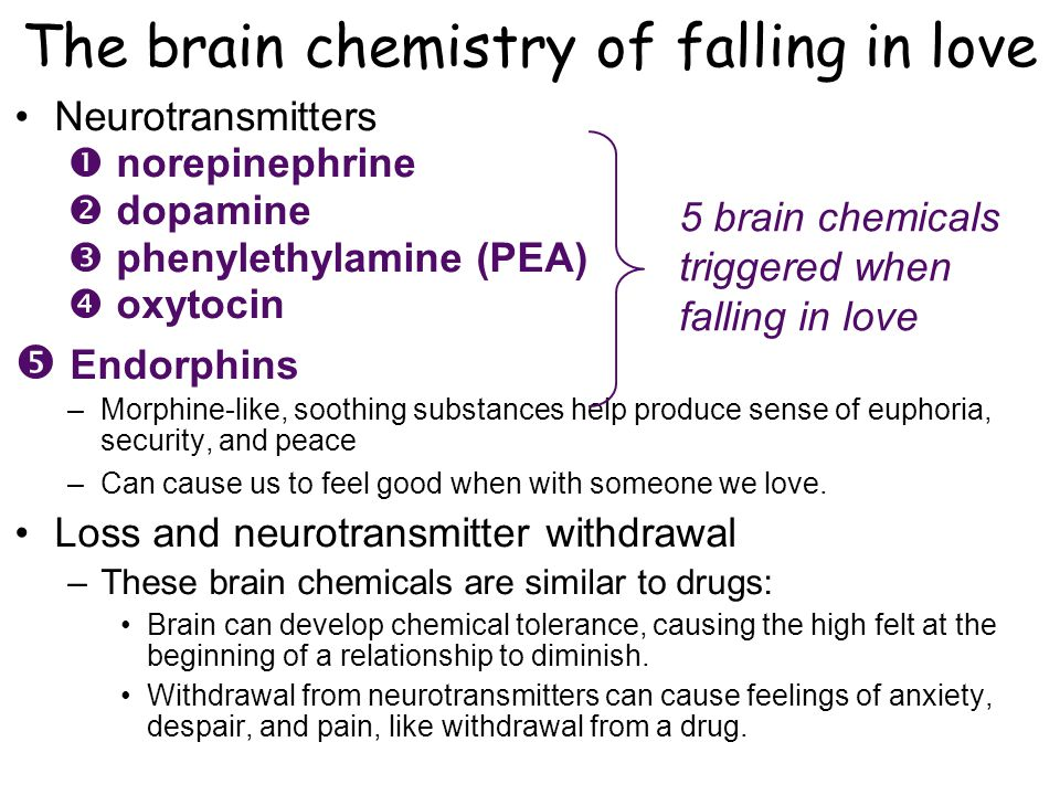 The brain chemistry of falling in love