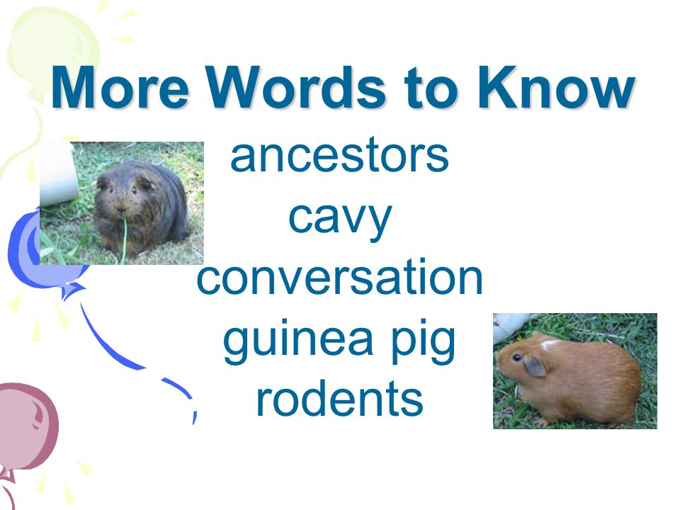 More Words to Know ancestors cavy conversation guinea pig rodents