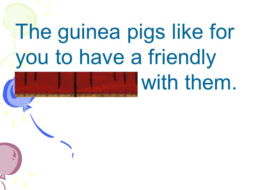 The guinea pigs like for you to have a friendly conversation with them.