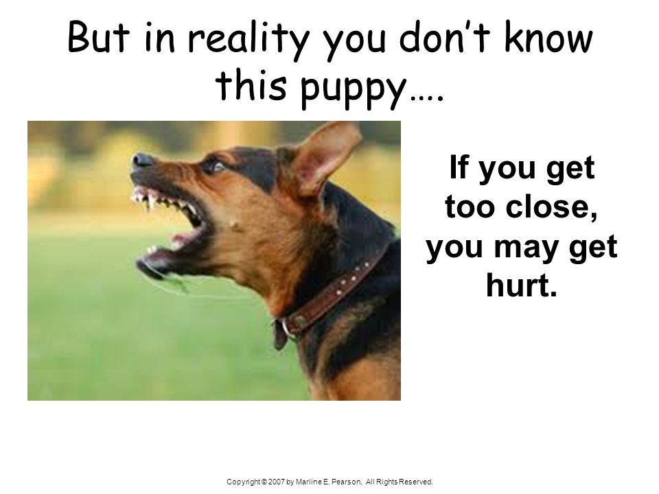 But in reality you don't know this puppy….