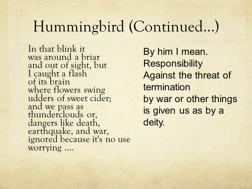 Hummingbird (Continued…)