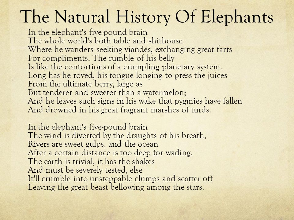 The Natural History Of Elephants