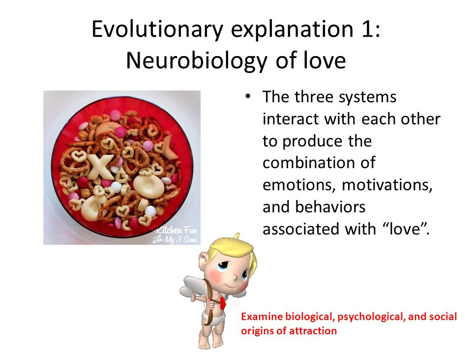 Evolutionary explanation 1: Neurobiology of love