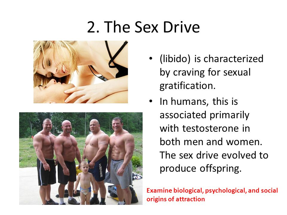 2. The Sex Drive (libido) is characterized by craving for sexual gratification.