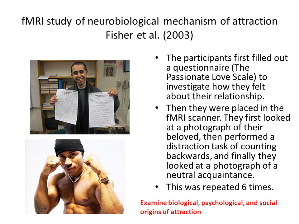 fMRI study of neurobiological mechanism of attraction Fisher et al