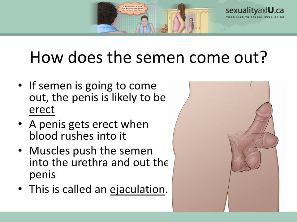 Sperm out of penis curious